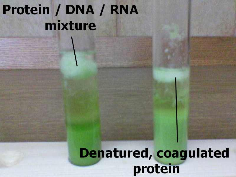 DNA extract.jpg - 34kB