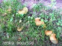 fungi_5.jpg - 765kB