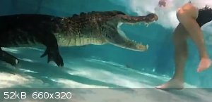 Caught-On-Alligator-in-pool-attacks-swimmer-Blogertize.jpg - 52kB