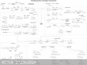 cannabinoid total biosynthesis.png - 407kB