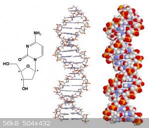 DNA.gif - 56kB