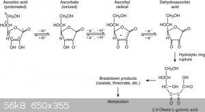 Ascorbic acid oxidation.jpg - 56kB