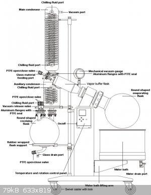 ernestborgnineappendectomyscar.gif - 79kB