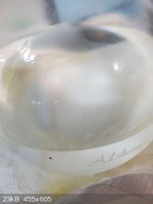NH4Cl H2O phorone 24 hours.JPG - 23kB