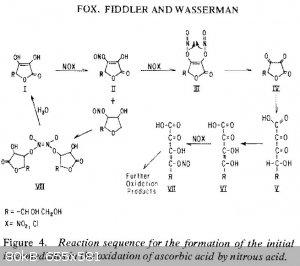 Ascorbic nitrous intermediates Wasserman - Copy.jpg - 80kB